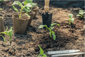 Plant seedling plants