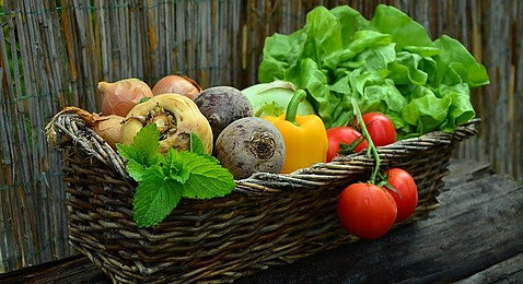 Harvested Vegetables in Basket
