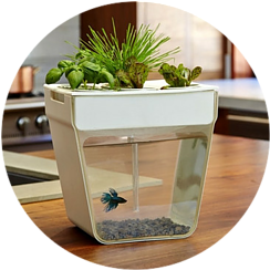 Hydroponic with beta fish bowl