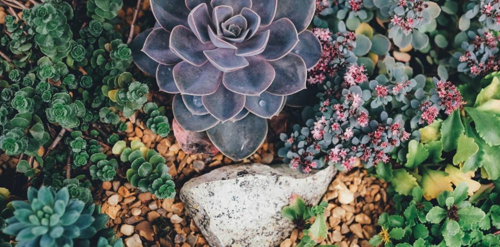 Outdoor Succulent Garden for Zone 5 & 6