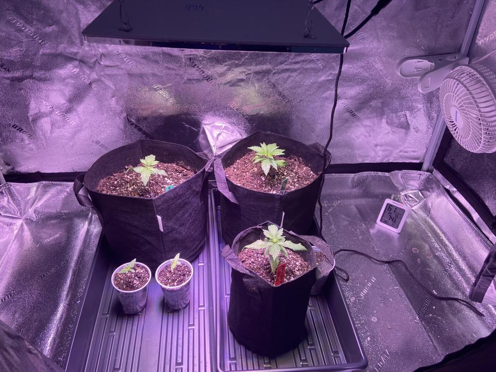 Plants in Grow Tent