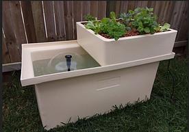 Small Backyard Aquaponics System