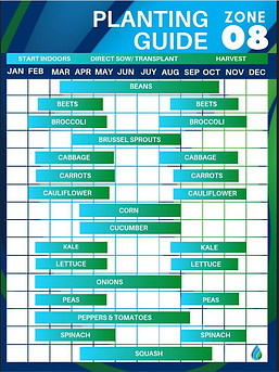 Zone 8 Vegetable Planting Schedule