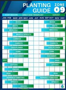 Zone 9 Vegetable Planting Schedule
