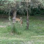 Deer backyard