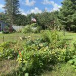 My overgrown garden 2020
