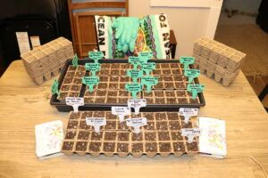 Perennial Seeds Planted