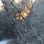 Sun shining through the frozen trees