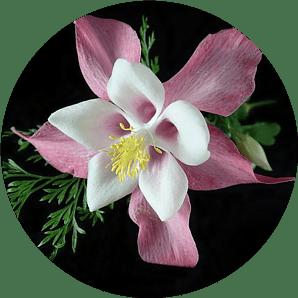 Columbine Flower - Best Plants for Container Gardening