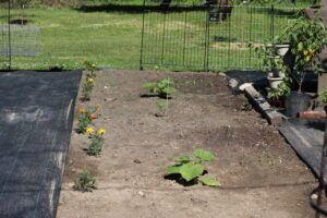 Vegetable Garden with Pumpkins